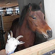 Bauernhof in Bayern mit vielen Tieren