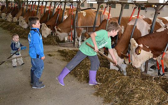 Bauernhof im Passauer Land - Stallarbeit